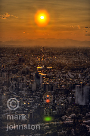 A blazing sun descends over Western Tokyo.  In the foreground, blossoming cherry trees in Aoyama Cemetary, and beyond, the winged roof of the Tokyo National Gymnasium in Yoyogi.  On the horizon lie the mountains of the Hakone area north of Mt. Fuji, which stands outside the left margin of this photo.