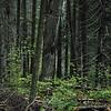 Algonqueen national Park- canada