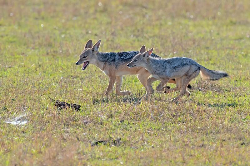 Kenya 2019 - Masai Mara - Nakuru - Naivasha