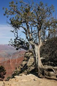Arizona 2005_268