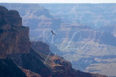 Arizona 2005_421