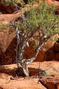 Arizona 2005_177