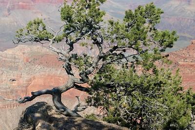 Arizona 2005_272