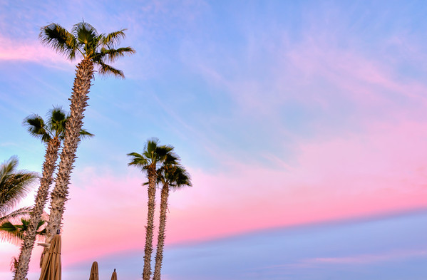 Pink & Palms