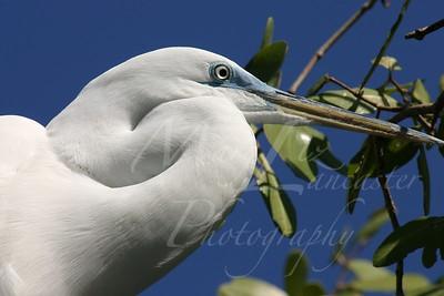 Florida 2005_0237