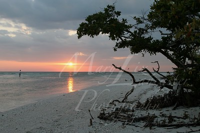 Florida08_6225