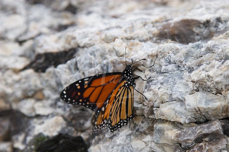 Butterfly_0724