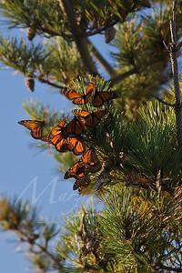 Butterflies_0919