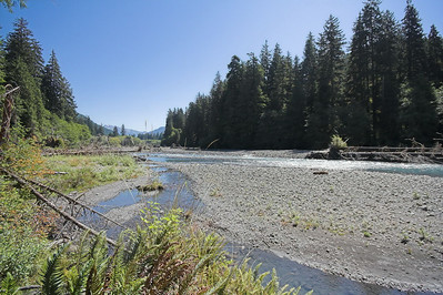 In a couple of places the trail wonders close to the Hoh River.