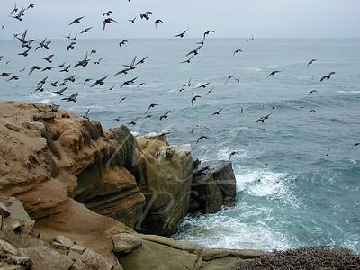San Diego_072