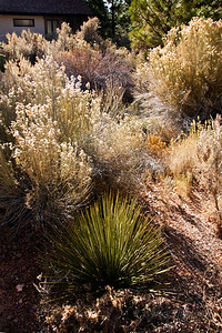 Plant life and the facilities at Red Canyon National Park.