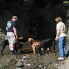 Creek near Walker, CA