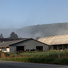 Morning mist rising up behind the cow barn across the road.