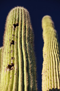 Saguaro holes (and super polarizer)