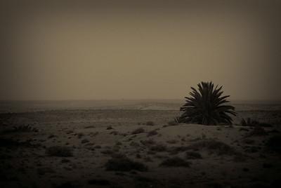 Tunisian plains