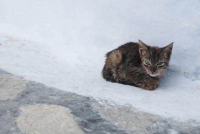 Lonely kitten in Hammamet