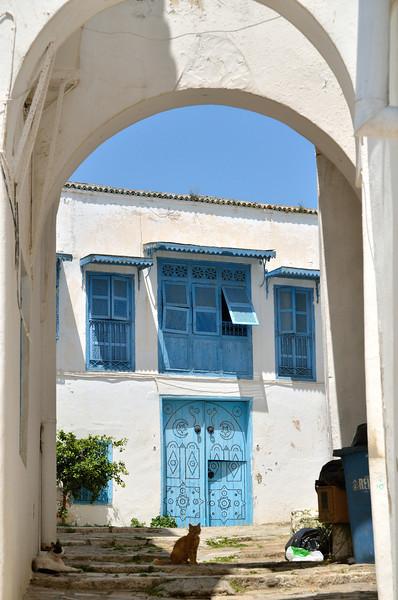 Cat in alley, Sidi Bou Said
