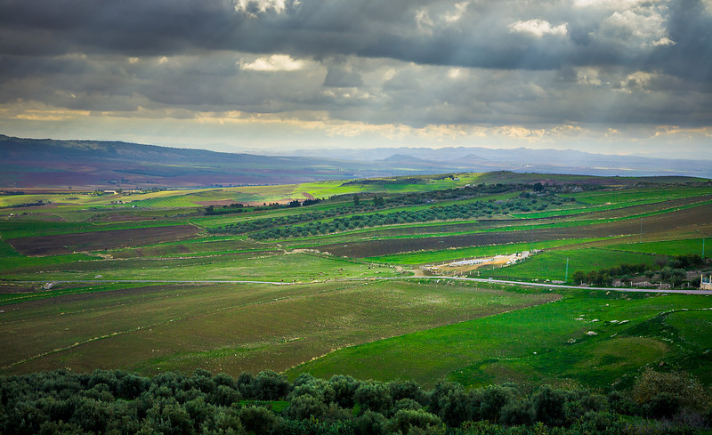 Fields of Douga - Tunisia