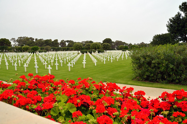 Poppies, American Cemetery, Carthage