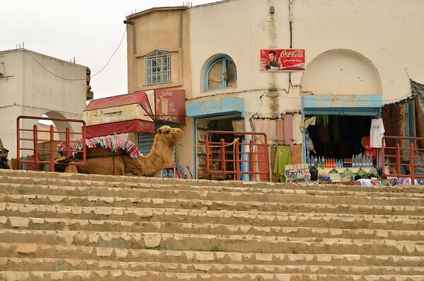 Camel in El Jem