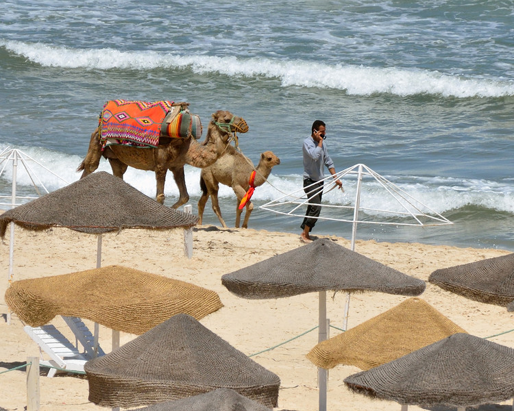 Camel and baby on the beach, Sousse