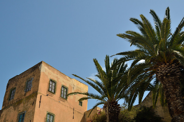 Palms and building, Sidi Bou Said