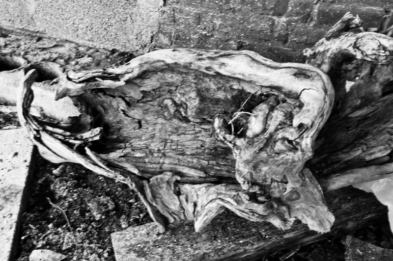 Driftwood in abandoned factory building.