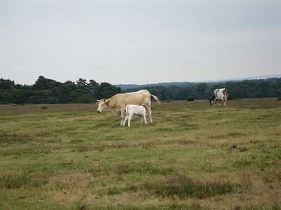 UK, New Forest