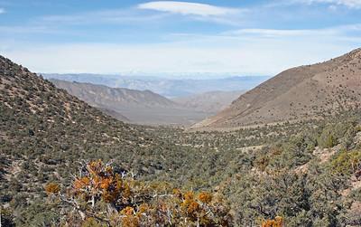 View west from Wildrose Peak Trail.