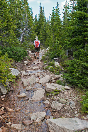 St. Vrain Mountain Trail, just below tree line. Most of the trail is rocky like this.