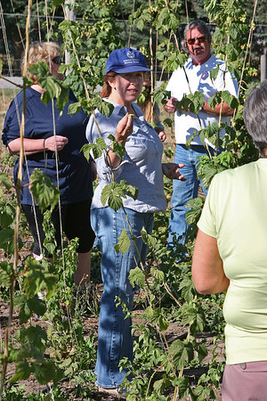 Sept 10, 2011, research professor, Montana State University experimental hop farm, Bozeman MT, Day 2.