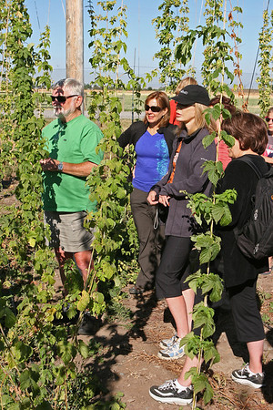 Sept 10, 2011, L-R Steve Cline, Sally Head, Cindy Deutsch, Louise Cline, Montana State University experimental hop farm, Bozeman MT, Day 2.