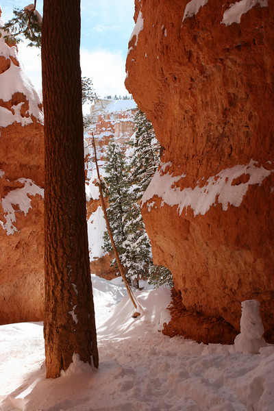 Navajo Loop Trail to the trail closure at Wall Street in Bryce.