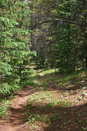 Mitchell Loop Trail, on a single track bicycle trail on the southwest side of the loop.