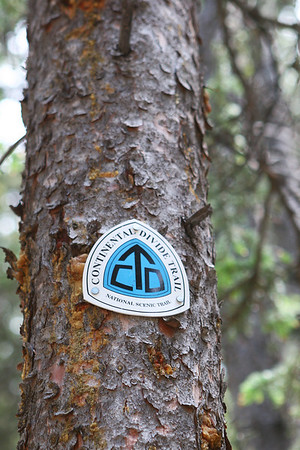 Mitchell Loop Trail, lodge pole pine forest southeast side of the loop. Continental Divide Trail marker.