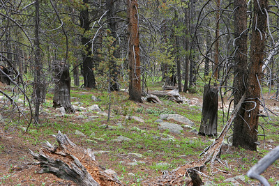 Mitchell Loop Trail, along the rail bed part of the trail. The entire area was cut at least 50 years ago. Note the stumps. Signs of a very old fire are everywhere.