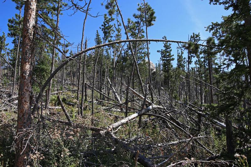 September 18, 2017 - Custer State Park. Hiking up Black Elk (Harney) Peak. View along the trail - including pine beetle damage.