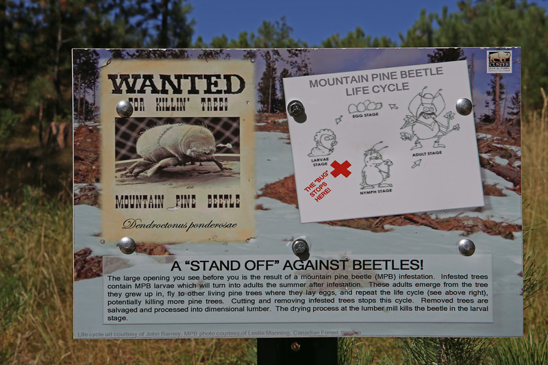 September 18, 2017 - Custer State Park. Hiking up Black Elk (Harney) Peak. There's evidence of pine beetle damage in several areas along the trail.