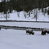 Zephyr Adventures. February 19, 2014. Bison along the Firehole River near the Midway Geyser Basin, Yellowstone National Park.