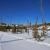 Zephyr Adventures. February 17, 2014. Loop Trail, Upper Geyser Basin, Yellowstone National Park.