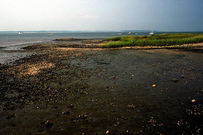 Low Tide; Cape Cod, Massachussets