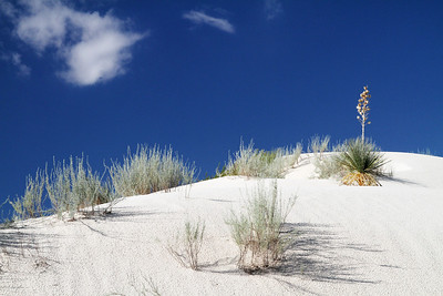 White Sands National Monument , New Mexico