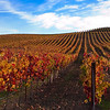 Autumn in Wine Country