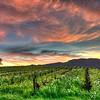Suneset in Vineyard, Sonoma County