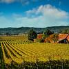 Red Barn and Vineyard