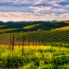 Late afternoon, Napa