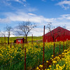 Mustard and Red Barn
