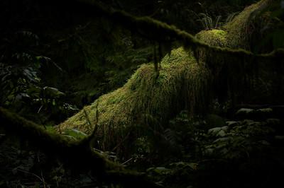 Oswald West State Park-Oregon