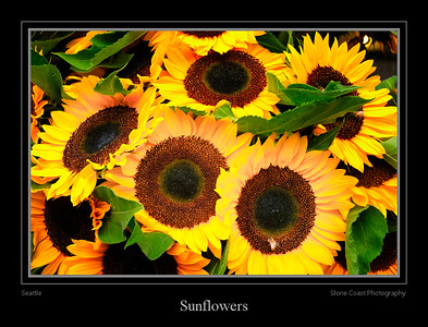 Sunflowers in the Seattle Public Market