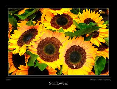Sunflowers in the Seattle Public Market